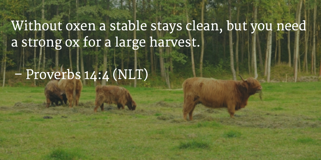 Daily Bible Verse Daily Devotion on increase is often messy
